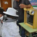 Beekeeping workshop 2