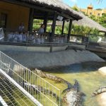 Crocodile Park Nursery 4