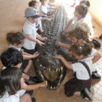 Crocodile Park Nursery 6